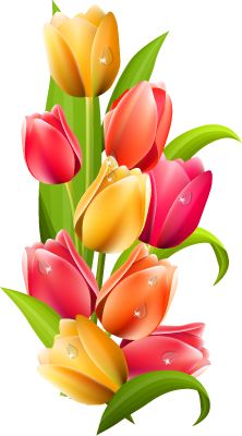 explore tube flowers clip art flowers and more tulip