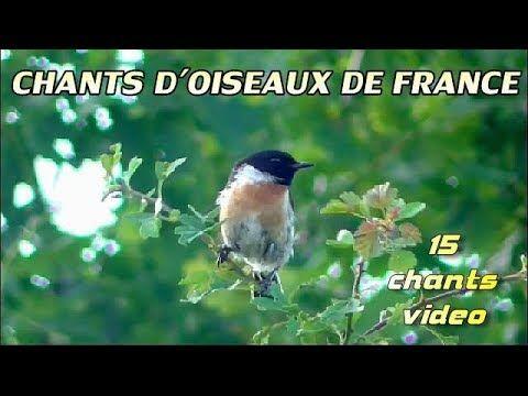 20++ Le chant des oiseaux du jardin ideas in 2021
