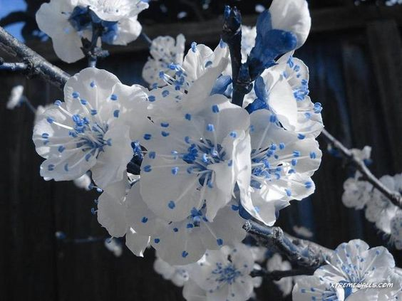 Love these blue and white flowers.