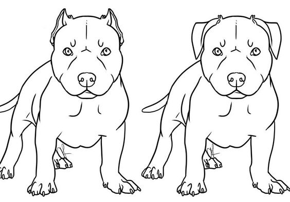 Pitbull Coloring Pages Download Pitbull Coloring Pages  Ziho Coloring  ~Fun Pitbull .