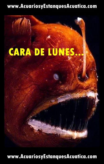 FELIZ COMIENZO DE SEMANA!!!!! #acuarios #estanques #lunes http://acuariosyestanquesacuatica.com/