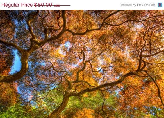 SALE  20 OFF  Dancing Branches  Nature by JoshFriedmanPhoto, $64.00