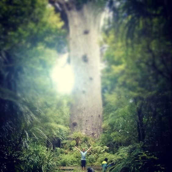 Tane Mahuta works his magic