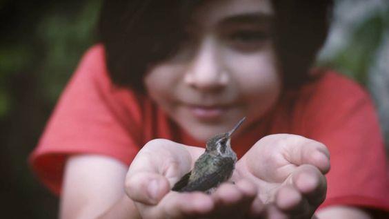 Bajado del nido - Colibri