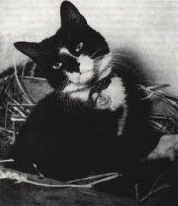 """Simon was the only cat to ever be awarded """"The Dicken Medal"""" which was the animal equivalent of the Victoria Cross. He was the ship's cat aboard HMS Amethyst, which was stranded in China during the civil war in 1948. While the ship was trapped, Simon killed hundreds of rats and mice. He almost single-handedly prevented the crew from starving, as without him all their supplies would have been eaten by the rodents. He was awarded the medal but unfortunately died before it could be presented."""