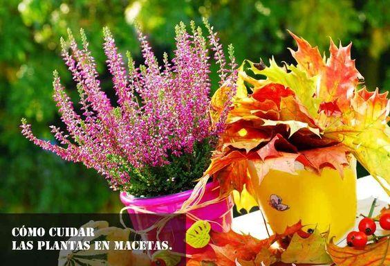 gracias a estos consejos mis plantas en macetas lucen más bellas