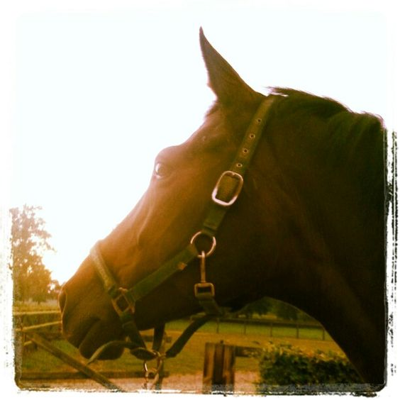 She's not just a horse, she's a horse who makes me proud with every little thing she does...