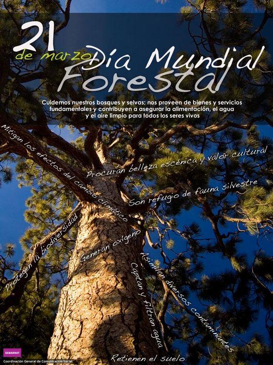 21 de marzo, día mundial forestal