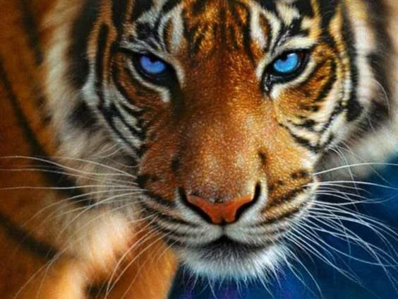 tiger | ... and Lost Dreams (A Human/Tiger rp) - Human Roleplay - Pet Adoptables