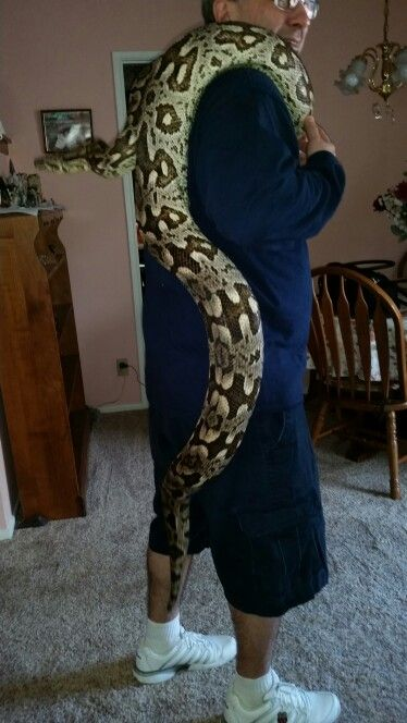 Giant Female Dumerils Boa. 10 ft+. | Snakes | Pinterest