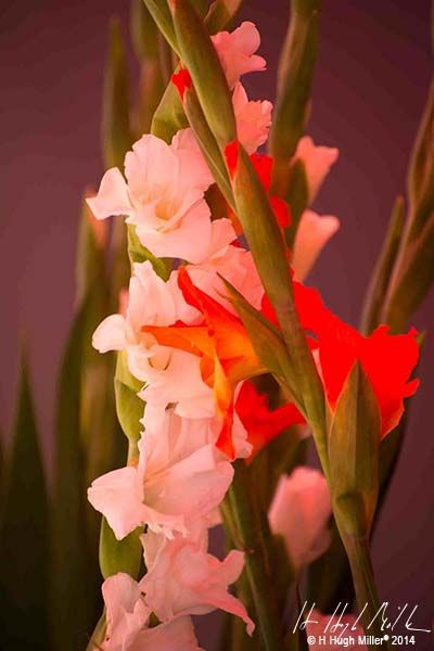 #floral #photography | H Hugh Miller