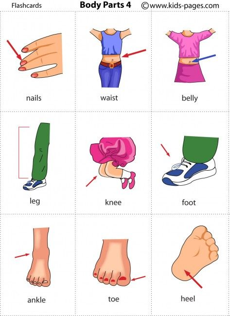 Free printable body parts flashcards | Body...le corps ...