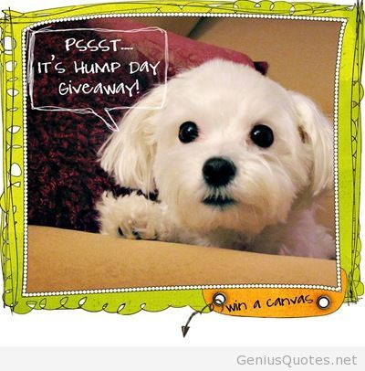 Its hump day funny saying card