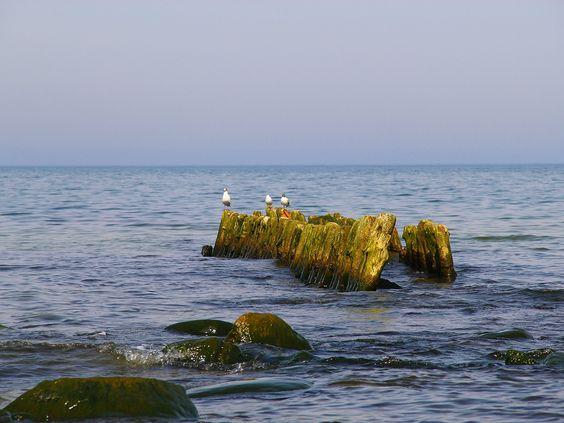 Балтика, чайки, Пионерский