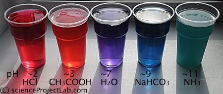 chemistry red cabbage prac The pigment that gives red cabbage its color is called anthocyanin it is also the pigment found in leaves that turn red or purple in the fall anthocyanin is a good indicator of acids and bases, as you saw from the changing colors in this experiment.