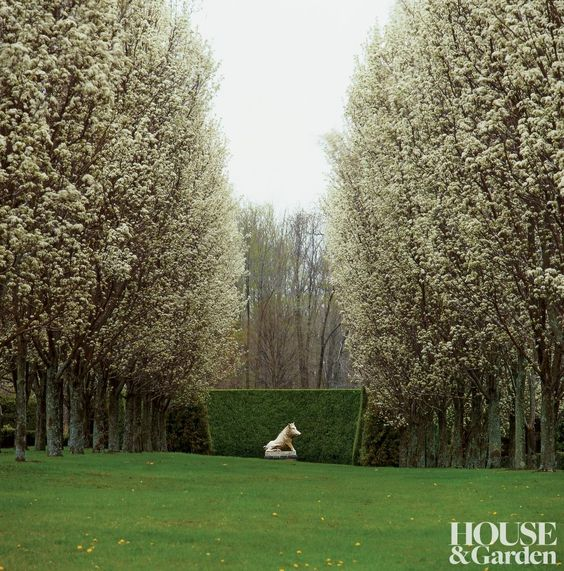 Oscar de la Renta's Connecticut garden, a copy of the Florentine Boar sits center stage within a horseshoe-shaped double hedge of juniper.: