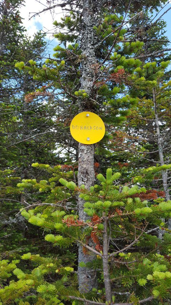 Donaldson, Adirondacks NY, 78/115- climbed 06/26/15
