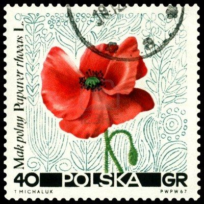 Google Image Result for http://us.123rf.com/400wm/400/400/blulake/blulake1108/blulake110800041/10393736-poland--circa-1967-a-stamp-printed-in-poland-shows-flower-papaver-rhoeas-circa-1967.jpg