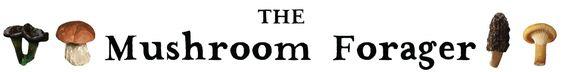 The Mushroom Forager