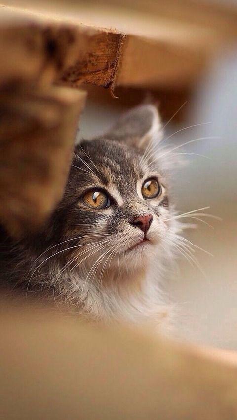 cat by DeeDeeBean