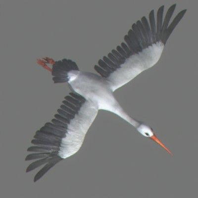 Stork Animated