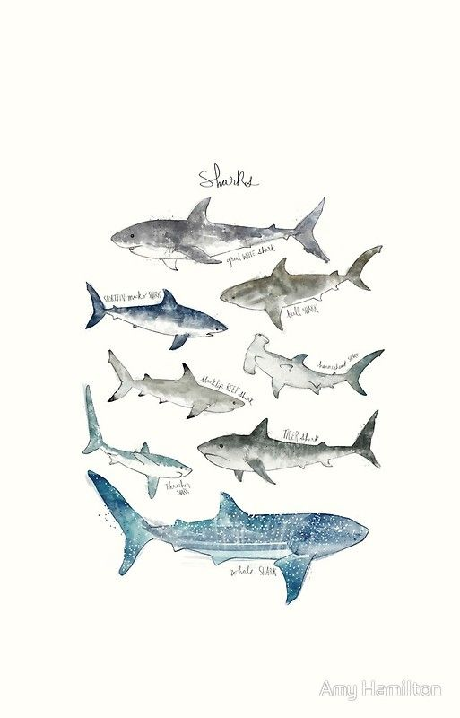 Sharks Shark Background Shark Art Shark Wallpaper Iphone