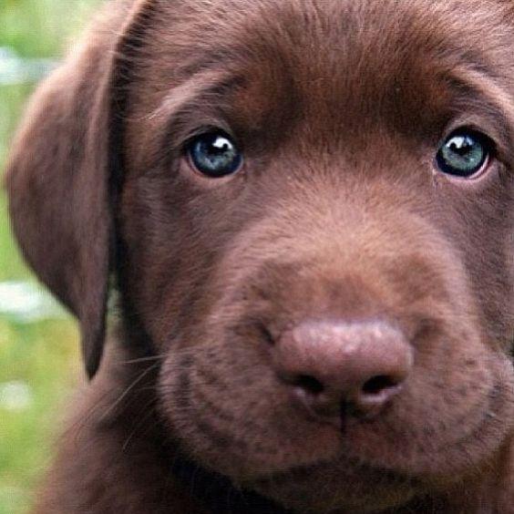 #cachorro                                                                                                                                                      Más