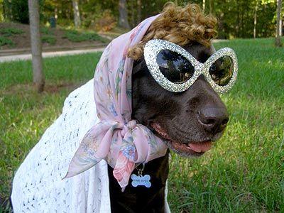 Google Image Result for http://img2.timeinc.net/people/i/2007/specials/halloween/dogs/dog2_grandma.jpg #PaulMitchell #HalloweenHair