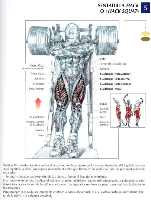 El Sitio Del Campeón Mundial Carlos Rodriguez Ejercicios Para Piernas Ejercicios Ejercicios Para Cuerpo Completo
