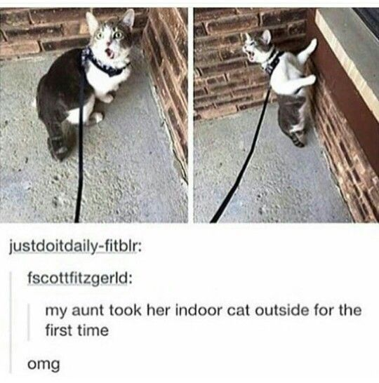 Don T Take Me Out Again Seriously If A Cat Is Happy Inside It Is Sure Safer Cat Catsupplieslitterbox Dont Happy Safer Cats Outside Cats Funny Cats