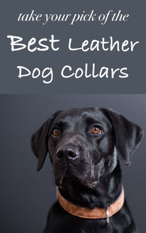 Best Leather Dog Collars Reviews Choosing Tips And Buying Guide