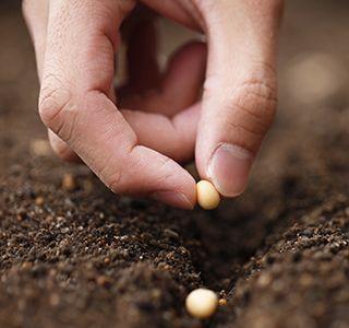 Newsletter : Samen auf der Fensterbank