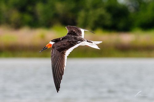 Skimmer - http://www.weeklytravelnews.com/skimmer/ #tourism