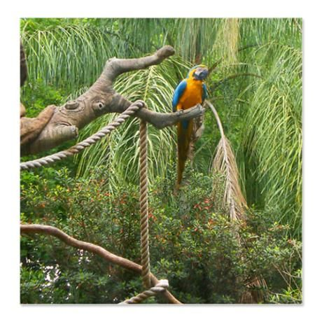 Parrot on a Branch Shower Curtain (Photograph) | Curtains ...
