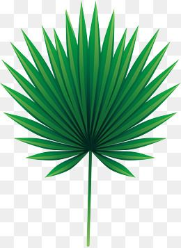 O Coco Verde Folhas Leaf Clipart Flower Clipart Palm Tree Png