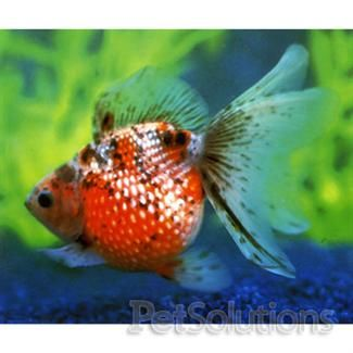 Exotic fresh water and fish on pinterest for What is the scientific name for fish
