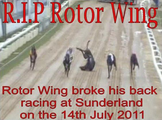 Make it known this is a true sickening fact of racing so remember this photo when you go to Gamble .