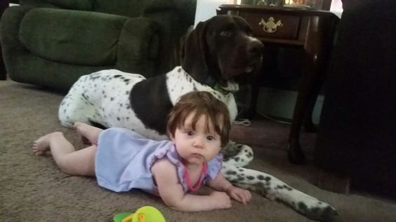 My little girl and my, her gsp.
