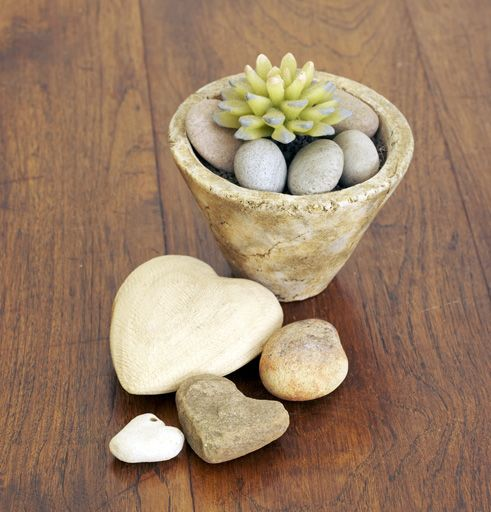 Cactus de hoja carnosa con base de piedras. Ideal junto a la ...