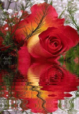 Animated Flowers. Water Reflections, Reflection, Animated Gif, Animated Gifs,  Flores,  Rosas,  Flowers, Beautiful Flowers, Keefers