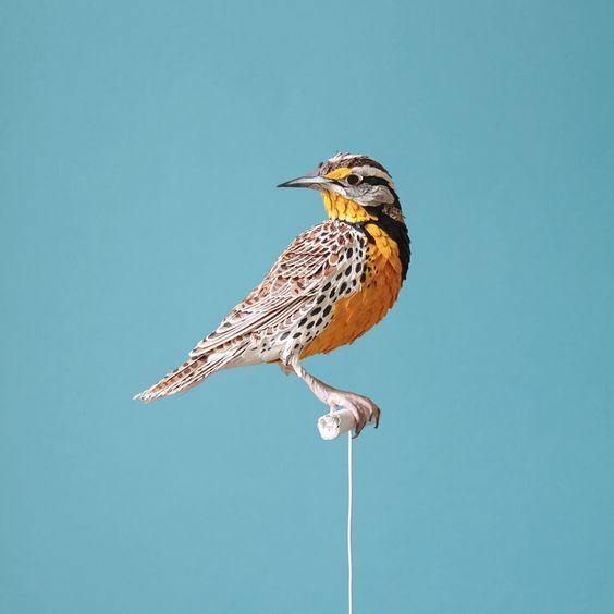 Diana Beltran Herrera est une artiste colombienne spécialisée dans la réalisation de sculptures et collages en papier. Sa magnifique série sur les oiseaux est impressionnantes de détails. Pour en découvrir plus, n'hésitez pas à faire un tour sur son profil flickr.
