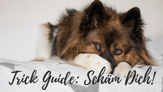 Trick Guide Scham Dich Hundetricks Hunde Begleithund