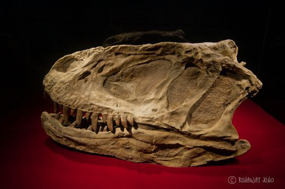 Asia's First Dinosaur Museum in Zigong, Sichuan, China    http://runawayjuno.com/2012/05/18/asias-first-dinosaur-museum-in-zigong-sichuan-china/