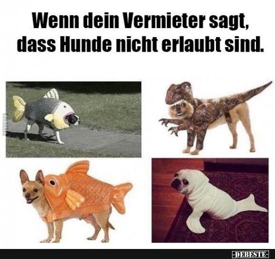 Wenn Dein Vermieter Sagt Dass Hunde Nicht Erlaubt Sind Lustige Bilder Spruche Witze Echt Lustig Witze Lustige Witze Lustige Pics
