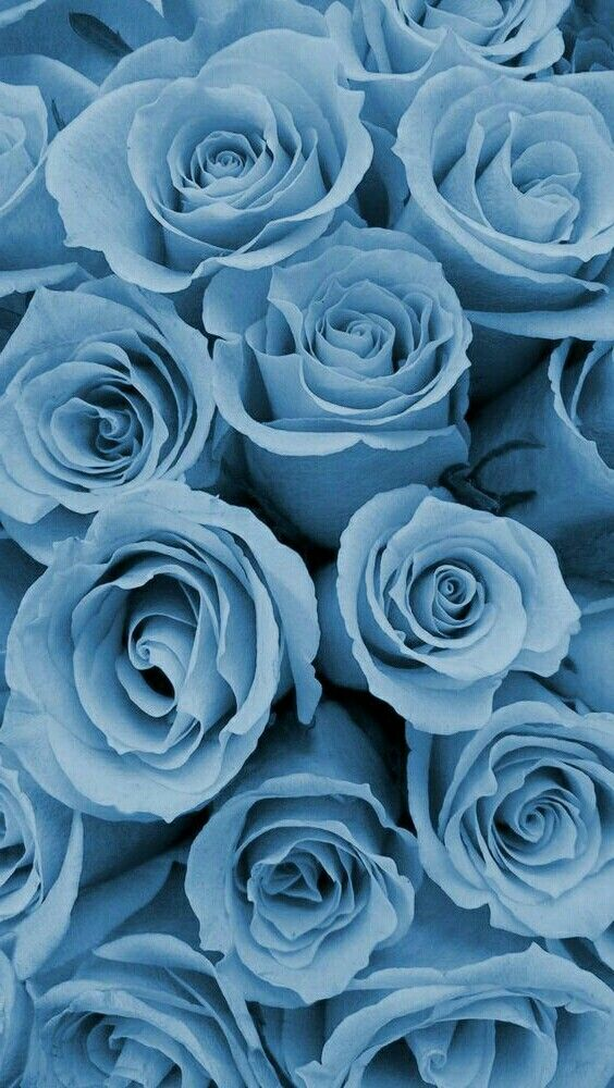 Wallpaper By Artist Unknown Blue Roses Wallpaper Blue Wallpaper Iphone Blue Flower Wallpaper