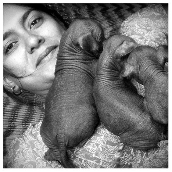 Artist Gabriela León with Xolo Puppies