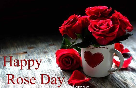 Download Rose Day Hd Images Rose Day Wallpapers For Your Mobile