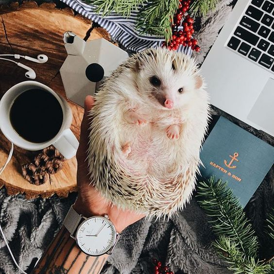 It's beginning to cost a lot like Christmas. 😄 >> Reminder that @pip.thehedgehog and I are going live on instagram this Wednesday, the 27th at 3PM PST/6PM EST — come hang out as we do some Q&A's! @kaptenandson #kaptenandson #bekapten