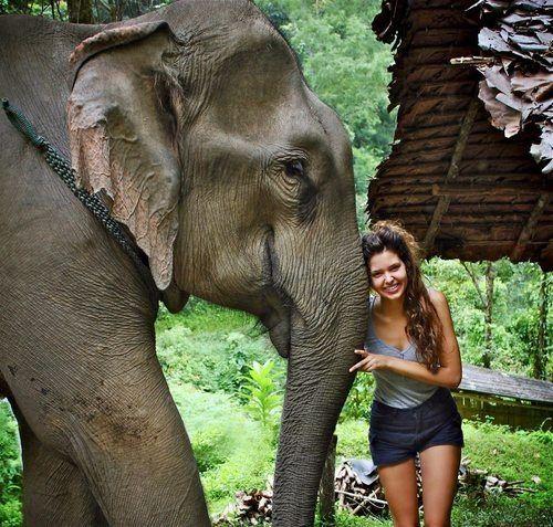I'd love to meet an elephant!