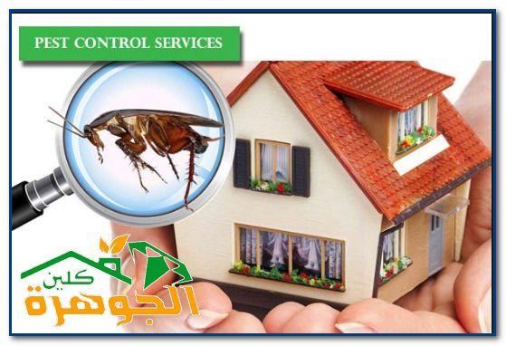 عروض شركة مكافحة حشرات بجدة للايجار 01025284450 01098424259 شركة الجوهرة كلين Pest Control Services Pest Control Bug Control